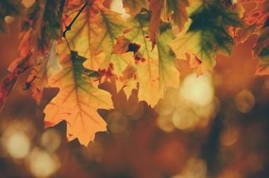 Powitanie Jesieni w Arboretum w Wojsławicach